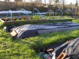 A sea of plastic... or an allotment, as it's otherwise known